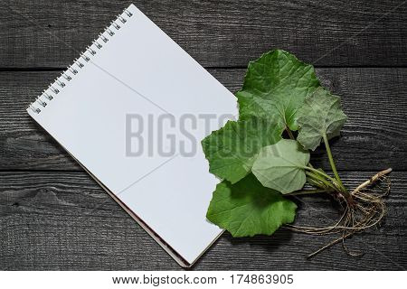 Medicinal plant coltsfoot (Tussilago farfara) and notebook to write recipes and methods of application. Actively used in herbal medicine