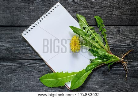 Medicinal plant dandelion (Taraxacum officinale) and notebook to write recipes and methods of application. Dandelion used in herbal medicine edible plant and nectariferous