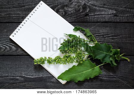 Medicinal plant Sorrel horse (Rumex confertus Asiatic Dock) and notebook to write recipes and methods of application. Used in herbal medicine for production of dyes leather tanning