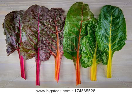 Rainbow Chard In A Line From Red To Yellow