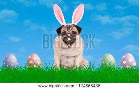 cute pug puppy dog sitting in grass wearing bunny ears diadem next to colorful pastel easter eggs with blue sky background