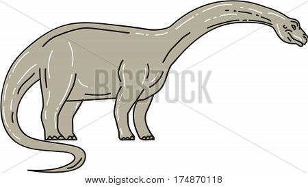 Illustration of a Brontosaurus meaning