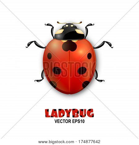 Vector close-up realistic ladybug insect icon isolated on white background. Design template of spring symbol. EPS10 illustration.