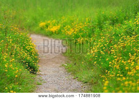 Walk way in the park during spring time
