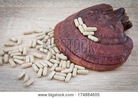 Ganoderma Lucidum Capsule - Ling Zhi Mushroom