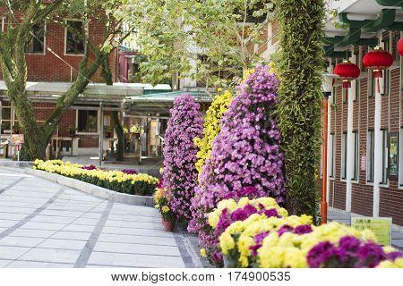 Lantau island  Kong Hong garden blossom flowers
