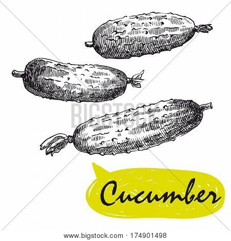 cucumber. set of hand drawn vector sketches on a white background