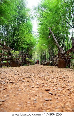Walkway Crushed Stone With Bamboo Cave At The National Ethnic Cultural Park