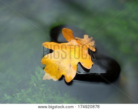 The Yellow Leaf In Stream. Rotten Oak Leaf On Stone