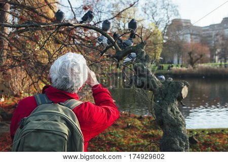 Back view of an old tourist man taking picture to the birds on a tree with the lake at background in St James Park in London on winter season.