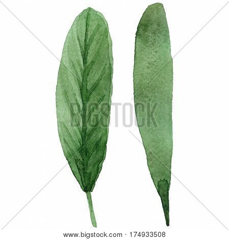 Exotic leaf in a watercolor style isolated. Aquarelle exotic flower for background, texture, wrapper pattern, frame or border.