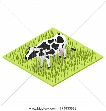 Black and white cow. Isometric view. Cattle grazing in a meadow in the village. Countryside farm. Moo animal. The source of milk. Vector illustration.