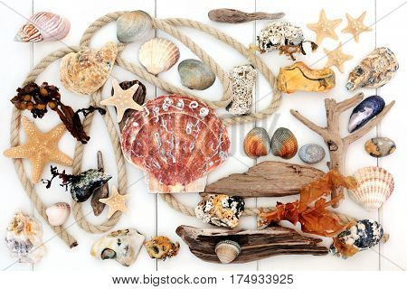 Natural seaside objects with driftwood, seashells, rope, rocks and seaweed on white wood background.