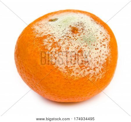 Rotten Tangerine With Mold, Spoiled. Isolated