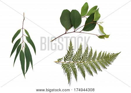 Australian plants and branches on white background