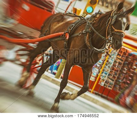 Horse-drawn Carriage Running In The Old Town.