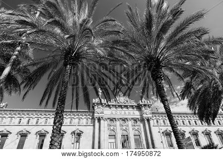 Barcelona (Catalunya Spain): the old harbor and palm trees. Black and white