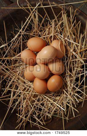 Brown Eggs 26