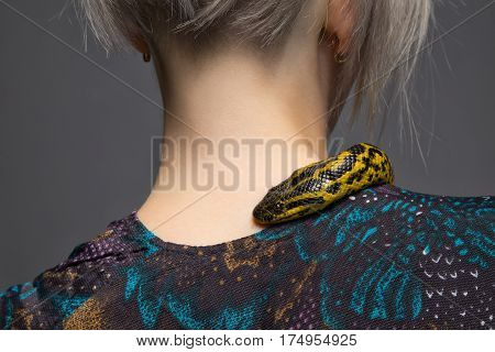 Anaconda crawling on woman's shoulder on gray background
