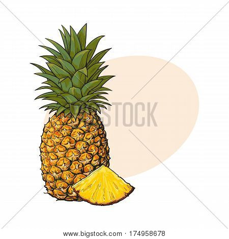 Whole, unpeeled, uncut, vertical pineapple and wedge formed slice, sketch style vector illustration with place for text. Realistic hand drawing of whole and wedge of fresh, ripe pineapple
