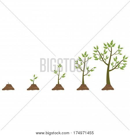 Stages of tree growth from small to large