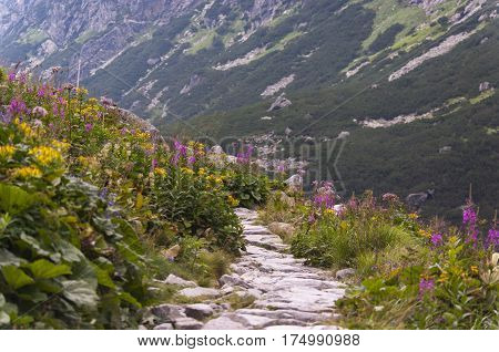 Summer mountain road with flowers. Tatry. Slovakia