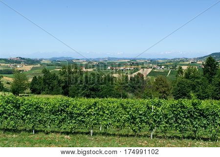 Vineyards of Monterrato on Piedmont in Italy