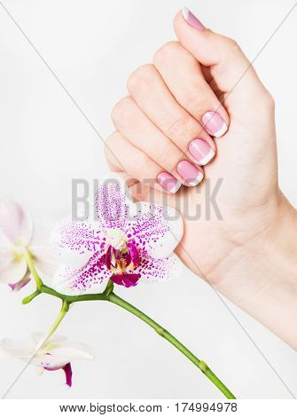 Closeup of female hands and fingers manicured. Fingernails with french spring manicure close to branch of orchid flowers isolated on white background. Painted with modern gel-polish with top cover.