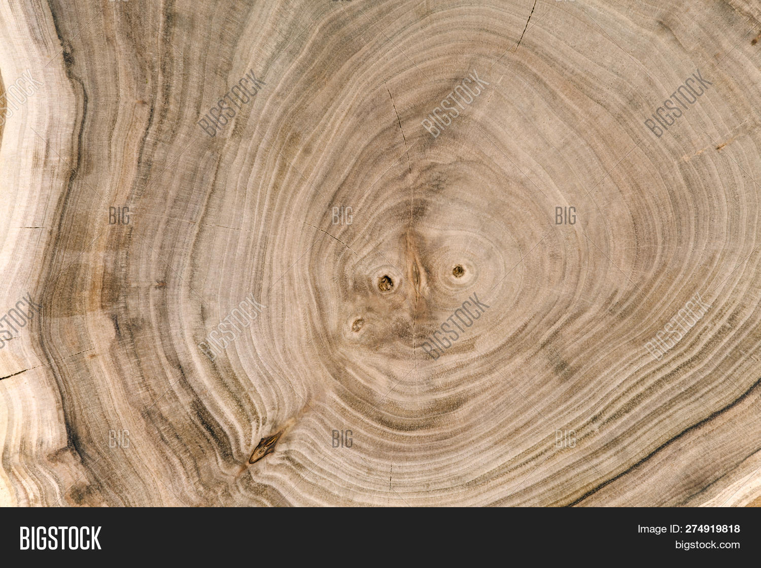 Wooden Cut Texture  Image & Photo (Free Trial) | Bigstock