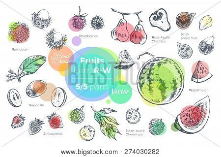 Fruits Hand Drawn Vector Set. Sketches Of Tropical Fruits From R To W For Design Of Juice Packages A