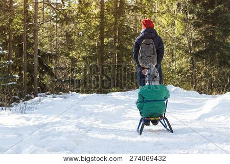 Mom Carries Her Son On A Sled Through The Snow-covered Coniferous Forest. Winter Sunny Day. Back Vie
