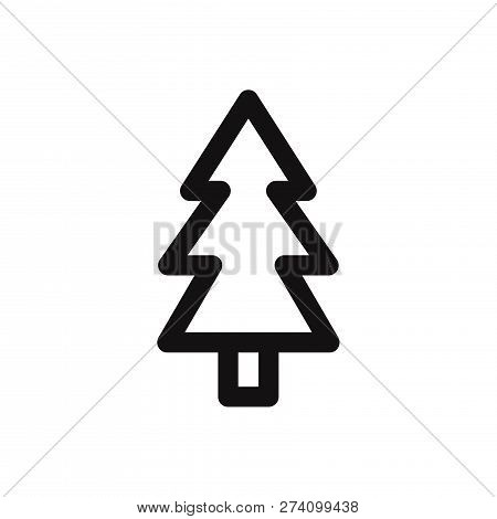 Pine Icon Isolated On White Background. Pine Icon In Trendy Design Style. Pine Vector Icon Modern An