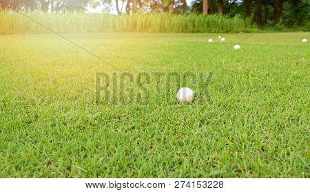 Golf Ball On Green Grass Of Golf Course / The Park Outdoors Golf Field