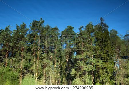 Abstract Background: Reflection Of The  Pine Forest In The Pond. Blue Sky And Trees Reflecting In A