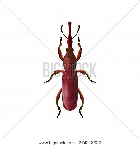 Straight-snouted Weevil Beetle. Vector Illustration Isolated On White Background