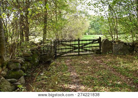 Traditional Stone Wall And An Old Wooden Gate At The Swedish Island Oland