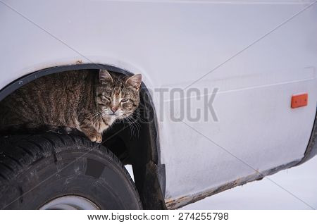 Stray Street Cat Sits On Car Wheel. Homeless Cat Hiding Looking For Warmth In Cold Weather (life In