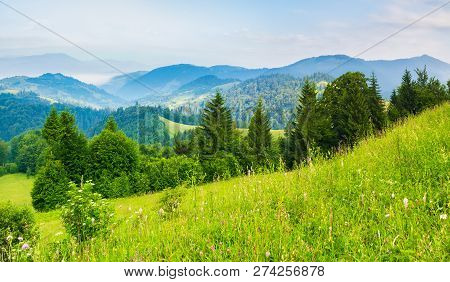 The Dawn In Mountains, Summer Season. Row Of Trees On Grassy Hillside Meadow. Distant Ridge In Blue