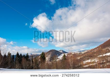 Beautiful Winter Landscape In Mountains. Leafless Birch Forest On A Snowy Slope. Wonderful Sunny Wea