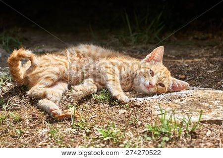 Young Cat Is Lying On The Roadside And Resting