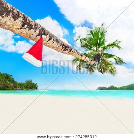 Red Santa Hat On Coconut Palm Tree At Perfect Tropical White Sandy Ocean Beach. Holiday Concept For