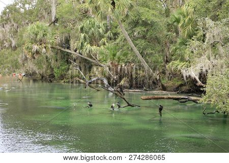 Manatee And Other Wildlife At Blue Springs State Park