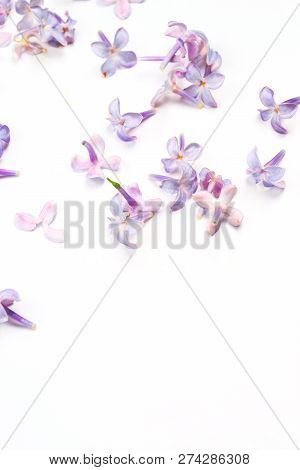 Spring Flowers. Purple Lilac Flowers Blossom Petals On White Background. Top View, Flat Lay, Copy Sp