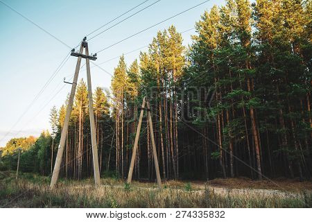Power Lines In Glade Along Conifer Trees In Sunlight. Poles With Wires Near Dirt Road Among Tall Pin