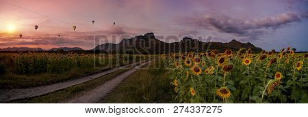 Sunflower Field In Sunset Time With Balloon In The Sky