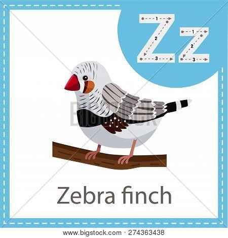 Illustrator Of Zebra Finch Bird For Kid