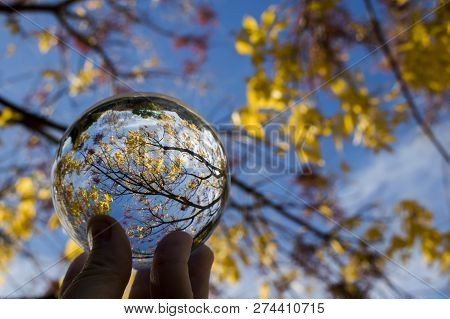 Glass Ball Captures Lines Colors And Shapes In Tree Branches And Leaves.  Image Looking Skyward With