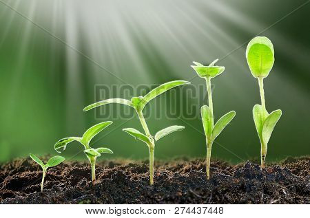 Agriculture. Growing Plants. Plant Seedling. Hand Nurturing And Watering Young Baby Plants Growing I