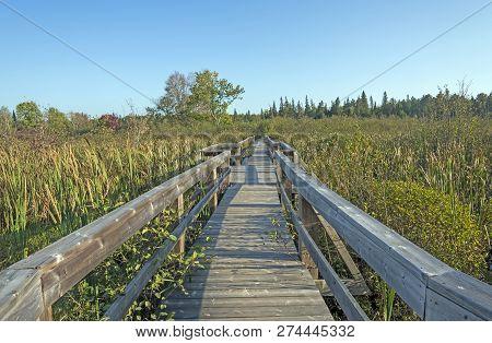 Wooden Walkway Into A Wilderness Bog In Samuel De Champlain Provincial Park In Ontario, Canada