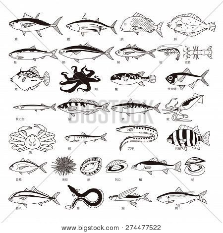 Sushi Fish Set On White Background. Vector Illustration.